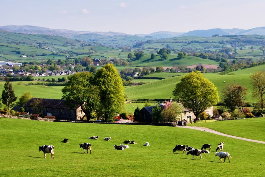 picture of rural farmland