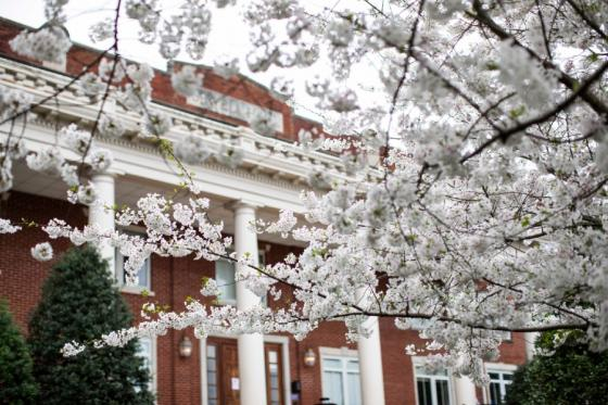 Floral trees blooming in front of Sewell Hall